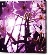 Fairy Flower Acrylic Print