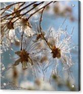 Fairy Flowers Acrylic Print