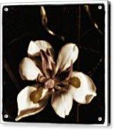 Fairy Iris. A Butterfly Landed On My Acrylic Print