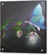 Fairy Lantern's Glow Acrylic Print