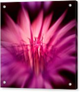 Fairy Light Acrylic Print