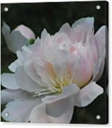 Fairy Tale Bloom Acrylic Print