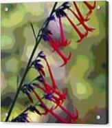Fairy Trumpet Acrylic Print
