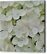 Fairy White Flowers Acrylic Print