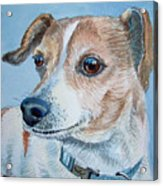 Beloved Dog Commission By Irina Sztukowski  Acrylic Print