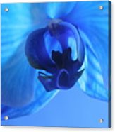 Faithfully Blue Acrylic Print