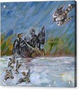 Falcon Attack  Acrylic Print