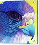 Falcon Medicine Acrylic Print