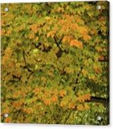 Fall #2 Acrylic Print