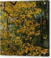 Fall 2010 12 Acrylic Print