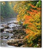 Fall Along The Cranberry River Acrylic Print by Thomas R Fletcher