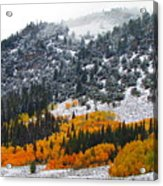 Fall And Winter Collide  Acrylic Print