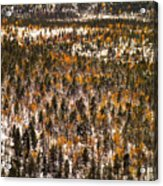 Fall And Winter On The Same Day Acrylic Print