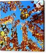Fall Apricot Leaves Acrylic Print