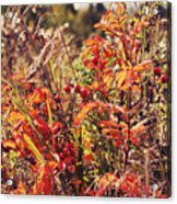 Fall Around  Acrylic Print