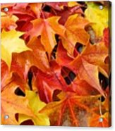 Fall Art Prints Red Orange Yellow Autumn Leaves Baslee Troutman Acrylic Print