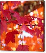 Fall Art Red Autumn Leaves Orange Fall Trees Baslee Troutman Acrylic Print