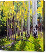 Fall Aspen Forest Acrylic Print by Gary Kim