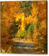 Fall Aspen Trail Acrylic Print