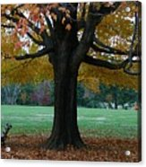 Fall At Maymont Acrylic Print