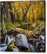Fall At Mcgee Creek Acrylic Print