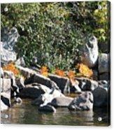 Fall At The Creek Acrylic Print