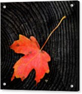 Fall Autumn Leaf On Old Weathered Wood Stump From A Tree Acrylic Print