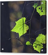 Fall Bokeh Acrylic Print