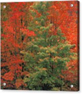 Fall Brilliance Acrylic Print