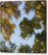 Fall Canopy In Virginia Acrylic Print