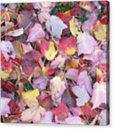 Fall Carpet Acrylic Print