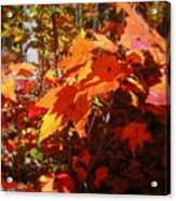 Fall Color 2 Acrylic Print