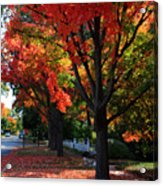 Fall Color 2010 No 5 Acrylic Print