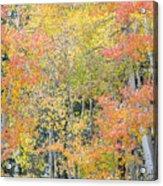 Fall Color At North Lake Acrylic Print