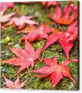 Fall Color Maple Leaves At The Forest In Nikko, Tochigi, Japan Acrylic Print