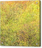 Fall Colors - Abstract Acrylic Print