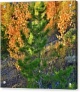 Fall Colors Along Dillon Reservoir Acrylic Print