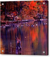 Fall Colors And Geese Acrylic Print