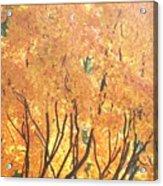 Fall Colors At Cape May Acrylic Print