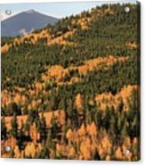 Fall Colors At Rocky Mountain National Park Acrylic Print