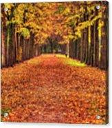 Fall Colors Avenue Acrylic Print