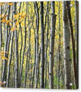 Fall Colors In Maine 2 Acrylic Print