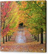 Fall Colors In Oregon Acrylic Print