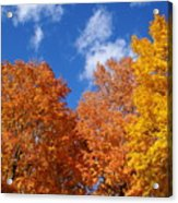 Fall Colors In Spokane Acrylic Print