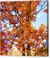 Fall Colors Looking Awesome Acrylic Print