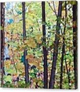 Fall Colour Medley Acrylic Print