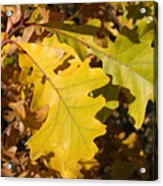 Fall Colours Acrylic Print