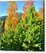 Fall Comes To Dillon Colorado Acrylic Print