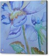 Fall Daisy Acrylic Print
