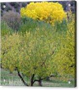 Bright Yellow Leaves, Dixon New Mexico Acrylic Print